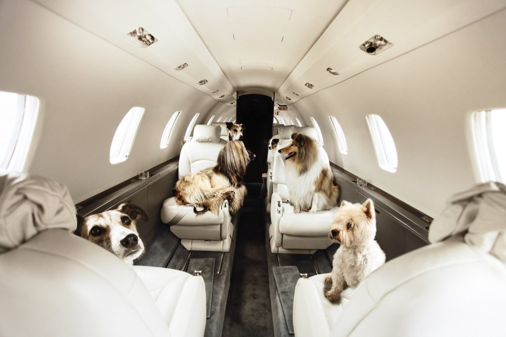 pet friendly private jets