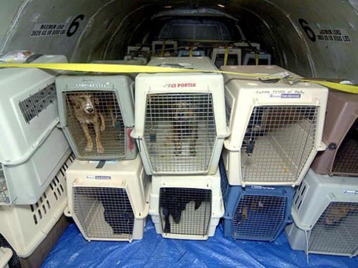 dogs in crates for airline travel