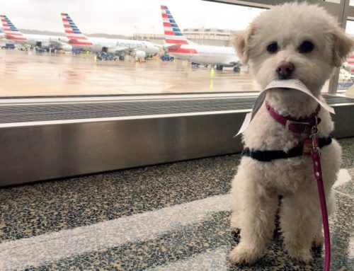 How Much Does it Cost to Fly Private with your Dog?